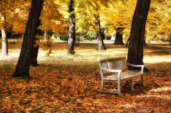 Parco-autunno